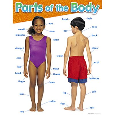 Parts of The Body Chart (Set of 3) T-38048