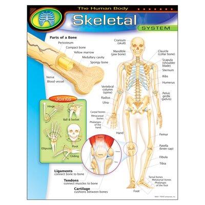 Skeletal System Gr 5 - 8 Chart T-38093