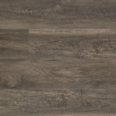 Dominion 6.13 x 54.34 x 12mm Chestnut Laminate Flooring in Steele Chestnut