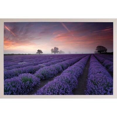 'Lavender Field-Dawn' Framed Graphic Art Print Poster Format: White Framed