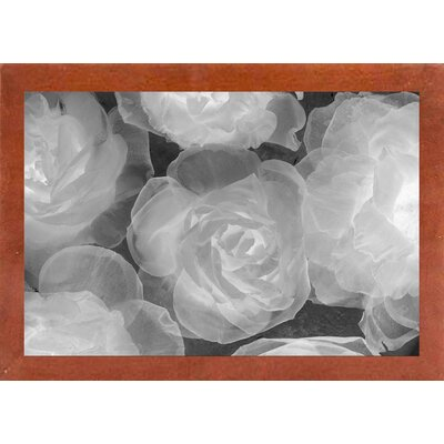 'Rosas Blancas' Graphic Art Print Format: Affordable Canadian Walnut Medium Framed Paper, Size: 20