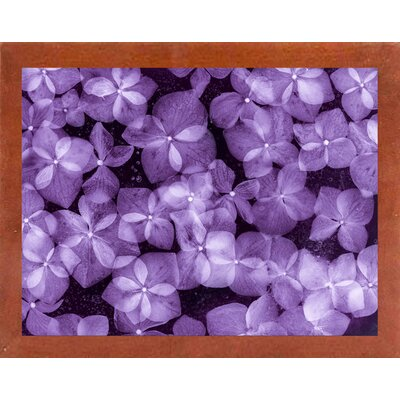 'Flores Congeladas 200' Graphic Art Print Format: Affordable Canadian Walnut Medium Framed Paper, Size: 28.3