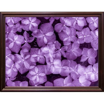 'Flores Congeladas 200' Graphic Art Print Format: Cherry Grande Framed Paper, Size: 28.3