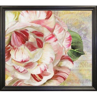 'Camellias II' Graphic Art Print Format: Black Grande Framed