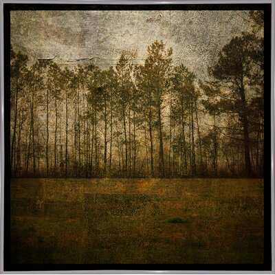 'A Line of Pines' Graphic Art Print Format: White Metal Framed Paper, Size: 15.75