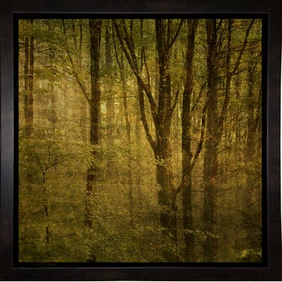 'Fog in Mountain Trees No. 2' Photographic Print Format: Affordable Black Medium Framed Paper, Size: 15.75