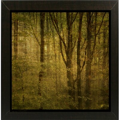 'Fog in Mountain Trees No. 2' Photographic Print Format: Affordable Brazilian Walnut Medium Framed Paper, Size: 15.75