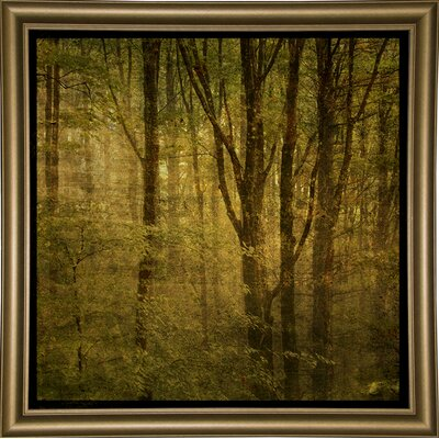 'Fog in Mountain Trees No. 2' Photographic Print Format: Bistro Gold Framed Paper, Size: 15.75