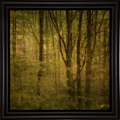 'Fog in Mountain Trees No. 2' Photographic Print Format: Bistro Espresso Framed Paper, Size: 15.75