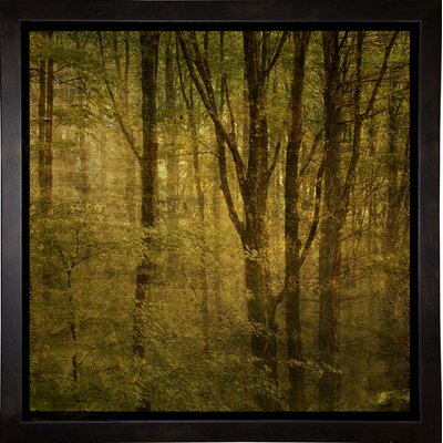 'Fog in Mountain Trees No. 2' Photographic Print Format: Cafe Espresso Framed Paper, Size: 15.75