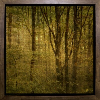 'Fog in Mountain Trees No. 2' Photographic Print Format: Cafe Mocha Framed Paper, Size: 15.75