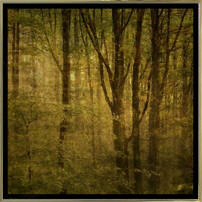 'Fog in Mountain Trees No. 2' Photographic Print Format: Gold Metal Framed Paper, Size: 15.75