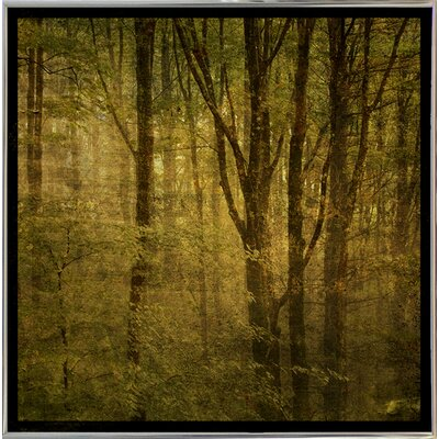 'Fog in Mountain Trees No. 2' Photographic Print Format: Silver Metal Framed Paper, Size: 15.75