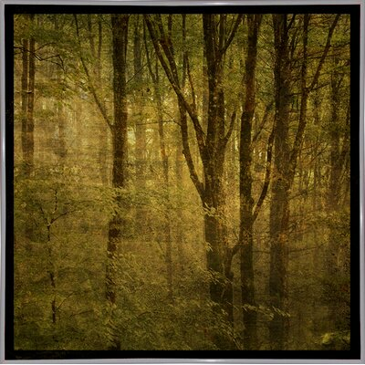 'Fog in Mountain Trees No. 2' Photographic Print Format: White Metal Framed Paper, Size: 15.75