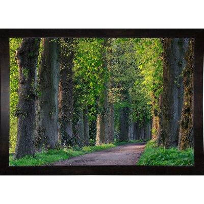 'Light Green Forest Road' Photographic Print Format: Black Wood Medium Framed Paper
