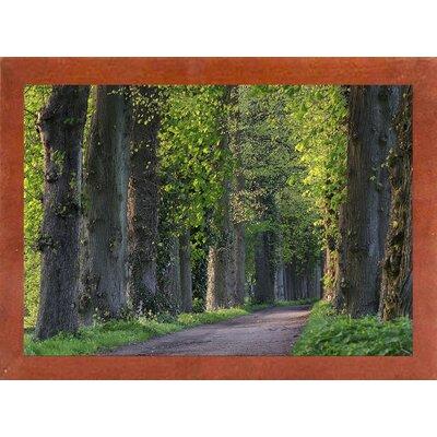'Light Green Forest Road' Photographic Print Format: Canadian Walnut Wood Medium Framed Paper