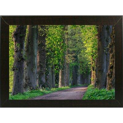 'Light Green Forest Road' Photographic Print Format: Brazilian Walnut Wood Medium Framed Paper