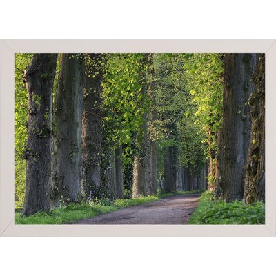 'Light Green Forest Road' Photographic Print Format: White Wood Medium Framed Paper