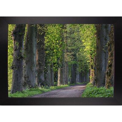 'Light Green Forest Road' Photographic Print Format: Black Wood Large Framed Paper
