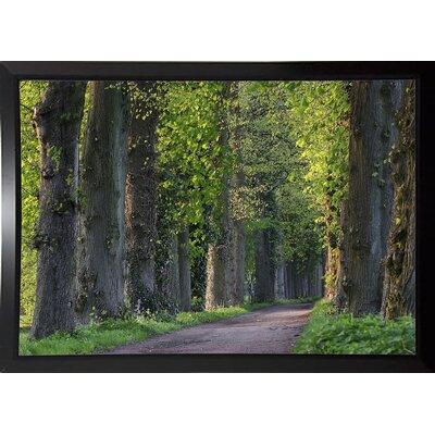 'Light Green Forest Road' Photographic Print Format: Black Plastic Framed Paper