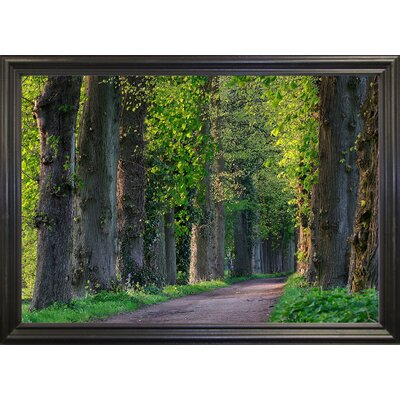 'Light Green Forest Road' Photographic Print Format: Black Wood Grande Framed Paper