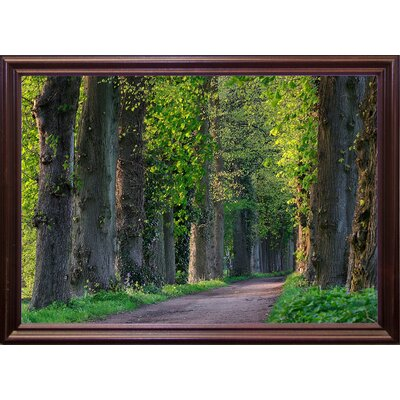 'Light Green Forest Road' Photographic Print Format: Cherry Wood Grande Framed Paper