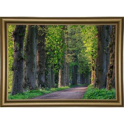'Light Green Forest Road' Photographic Print Format: Bistro Gold Framed Paper