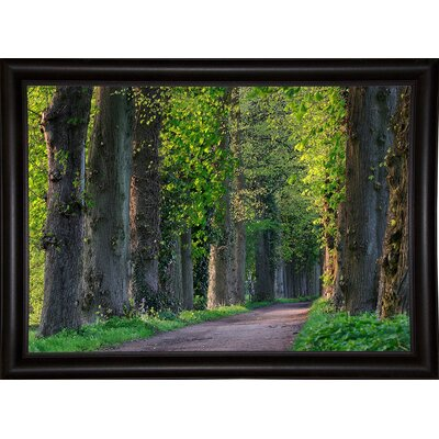 'Light Green Forest Road' Photographic Print Format: Bistro Expresso Framed Paper