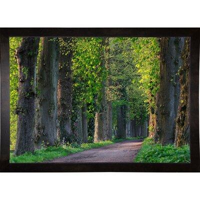 'Light Green Forest Road' Photographic Print Format: Cafe Espresso Wood Framed Paper