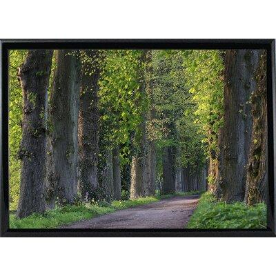 'Light Green Forest Road' Photographic Print Format: Black Metal Framed Paper