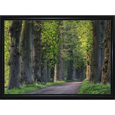 'Light Green Forest Road' Photographic Print Format: Black Metal Flat Framed Paper