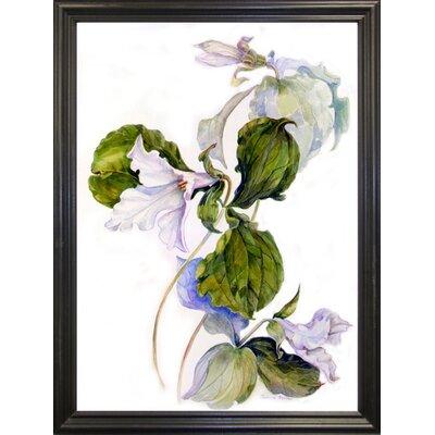 'White Trillium' Print Format: Black Wood Grande Framed Paper
