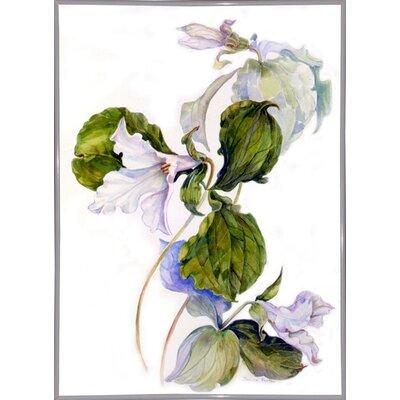 'White Trillium' Print Format: White Metal Framed Paper