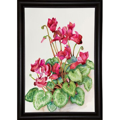'Red Cyclamen' Print Format: Bistro Expresso Framed Paper