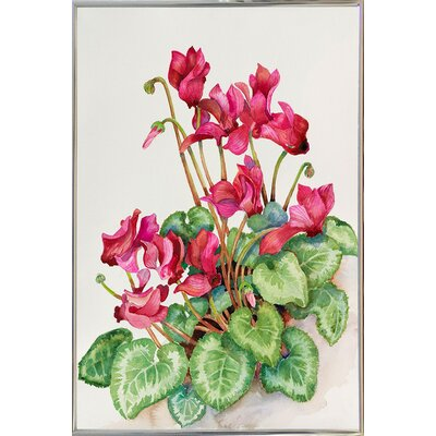 'Red Cyclamen' Print Format: Silver Metal Framed Paper