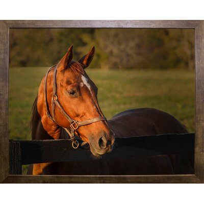 'Horse Portrait' Photographic Print Format: Cafe Mocha Wood Framed, Size: 10.5'' H x 13.5'' W x 2