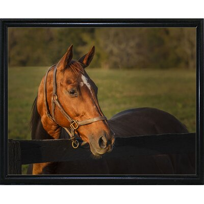 'Horse Portrait' Photographic Print Format: Flat Black Metal Framed, Size: 10.5'' H x 13.5'' W x 2
