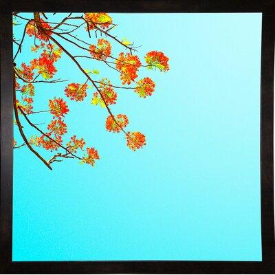 'Color Pops 2' Graphic Art Print Format: Black Medium Framed Paper, Size: 17.25