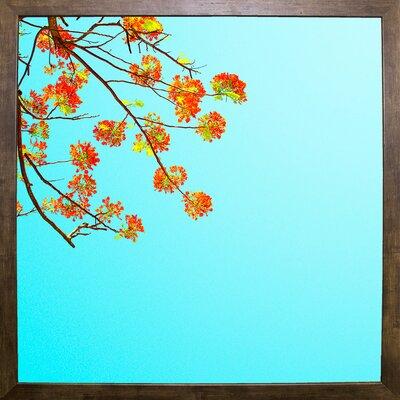 'Color Pops 2' Graphic Art Print Format: Cafe Mocha Framed Paper, Size: 17.25