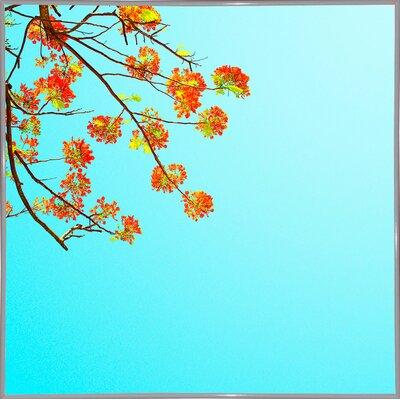 'Color Pops 2' Graphic Art Print Format: White Metal Framed Paper, Size: 17.25