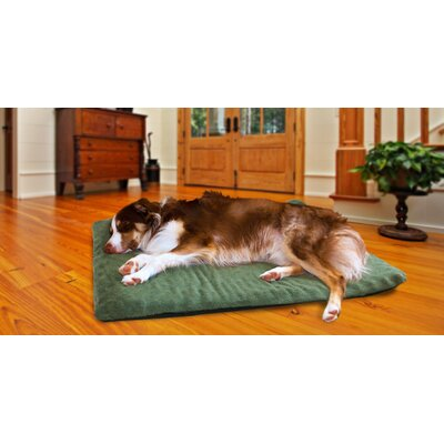 Candy Terry Top Ortho Dog Bed Color: Forest, Size: 2 H x 25.5 W x 34.5 D