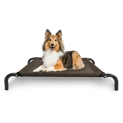 Elevated Pet Dog Bed/Cot Color: Espresso, Size: Small (35.5