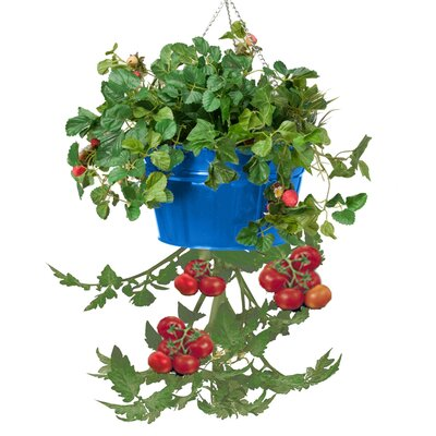 Galvanized Steel Hanging Planter (Set of 12)
