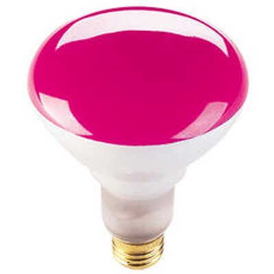 75W Pink 120-Volt Halogen Light Bulb (Set of 8)