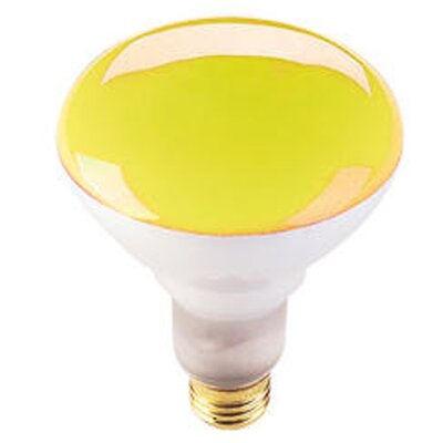 75W Amber 120-Volt Halogen Light Bulb (Set of 8)