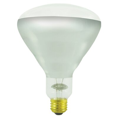 250W Incandescent Light Bulb (Set of 3)