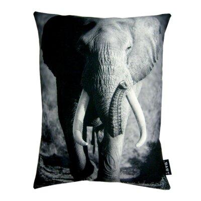 Tusk Pillow Lumbar Pillow