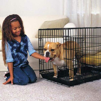 Everlasting Folding Pet Crate Size: Small (20 H x 24 W x 17 L)