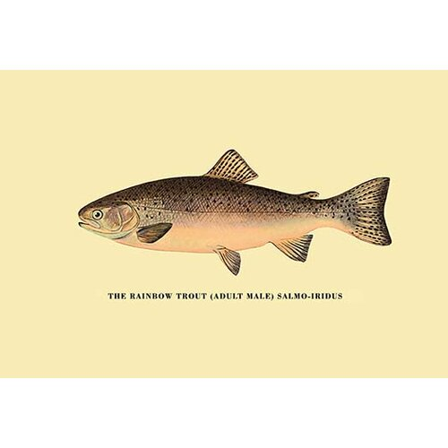 an analysis of the rainbow trout