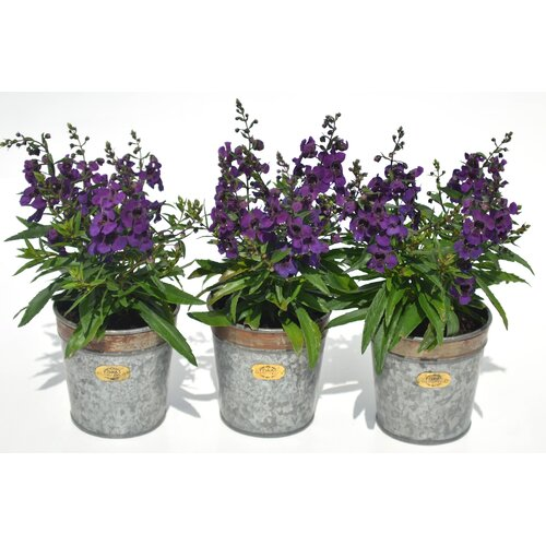 Blumentopf Croxton | Garten > Pflanzen > Blumentöpfe | Grau | Foras